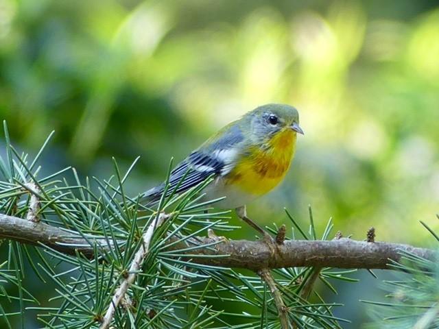 Birds By Type - Northern Virginia Bird Club