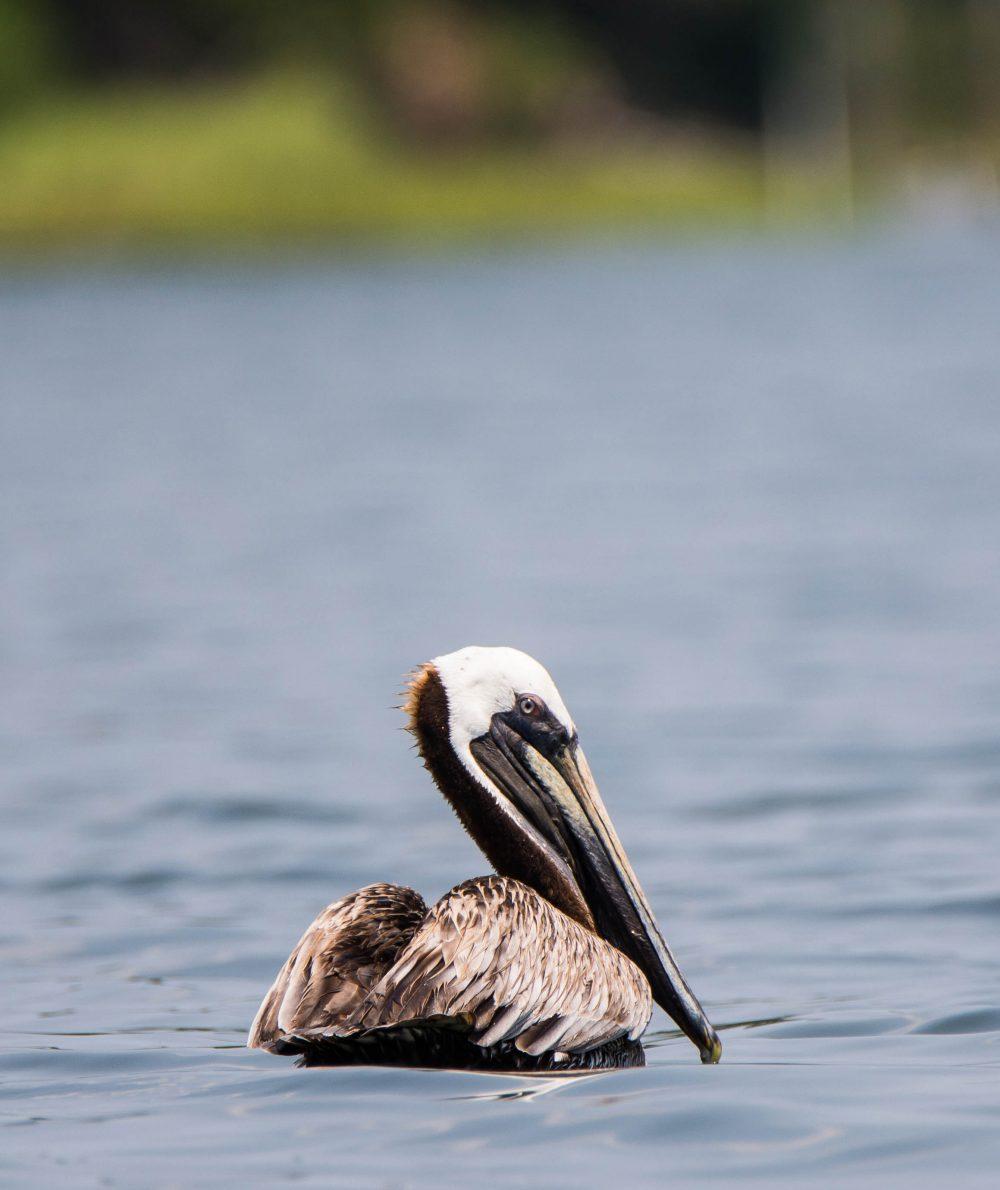 Birds By Type Northern Virginia Bird Club